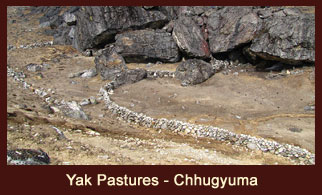 Chhugyuma, is the yak pasture in Everest Region of Nepal.