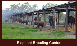 Elephant Breeding Center at Chitwan National Park in Nepal.