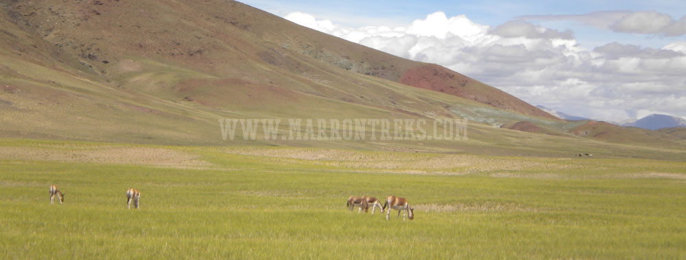 The Lhasa Kathmandu Overland Tour gives you an opportunity to discover the real Tibet on road.