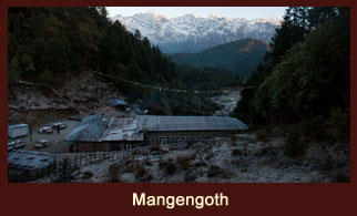 Mangengoth, a tiny settlement in the Langtang region of Nepal embellished with beautiful rhododendron clusters.