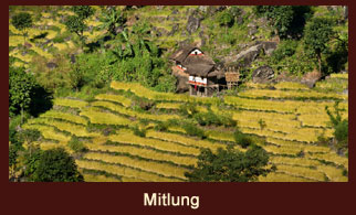 Mitlung, a moderately populated village in the Kanchenjunga region of Nepal.