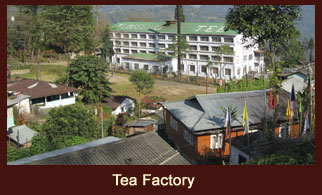 The verdant tea garden of Darjeeling in the Indian state of West Bengal is known for the production of aromatic tea leaves.