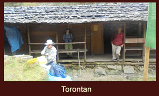 Torantan, a campsite in the Kanchenjunga region of Nepal that lies amidst the towering fir trees.