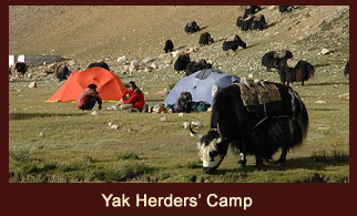 Yak Herder's Camp, one of the wonderful campsites for the Druk Path trekkers in Bhutan.