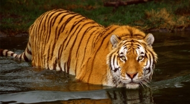 Bardia National Park Tour - 07 Days