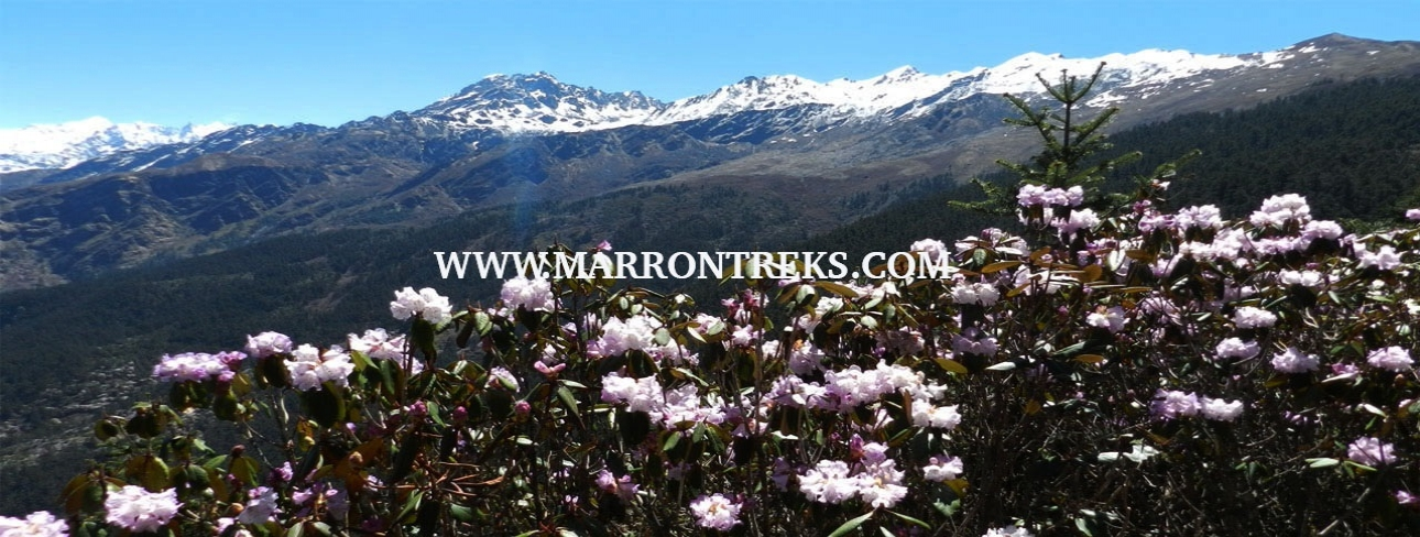 BEAUTIFUL FLOWERS BLOOMING IN LANGTANG
